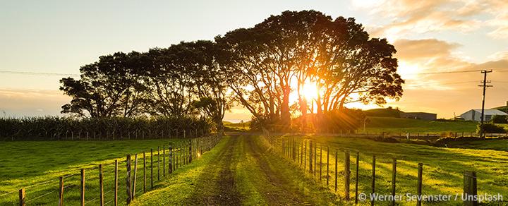 Neuseeland - Image Ratgeber Manuka