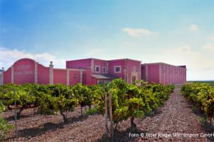 Welch idyllische Wein-Plantage... Foto: © Peter Riegel Weinimport GmbH