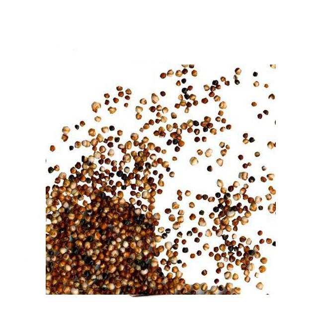Canihua liefert Ballaststoffe Eiweiße und Mineralstoffe wertvolle Knabberei aufgepoppt wie Popcorn